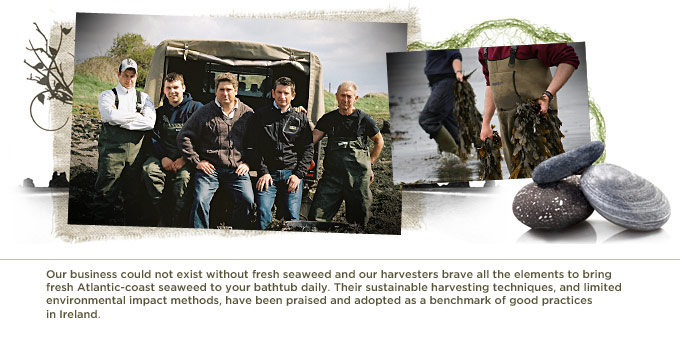 Our business could not exist without fresh seaweed and our harvesters brave all the elements to bring fresh Atlantic-coast seaweed to your bathtub daily. Their sustainable harvesting techniques, and limited environmental impact methods, have been praised and adopted as a benchmark of good practices  in Ireland.