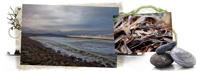 VOYA_Seaweed Baths Banners_D1